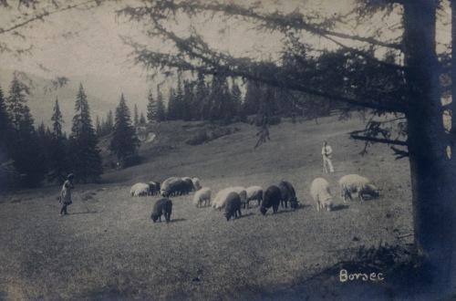 Borszékfürdő:legeltetés a Tündérkertben.1932