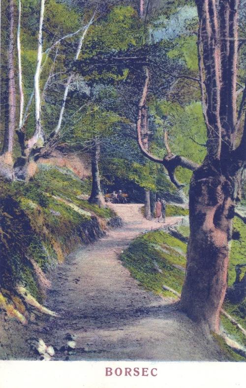 Borszékfürdő:Bükk-havasra vezető út.1928