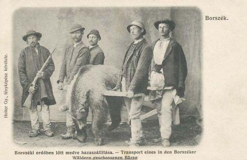 borszéki erdőben 1903-ban lőtt medve hazaszállitása bocskorban.1906