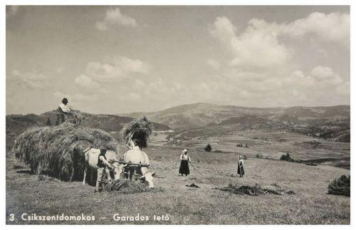 Csikszentdomokos:Garados tető,munka a mezőn.1943