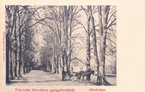 Hársfalva:hársfa sor.1904