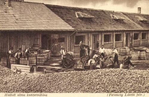 Hangya Fogyasztási Szövetkezet meggyesfalvi Kaláka konzervgyára:hullott alma konzerválása,1943-ban.