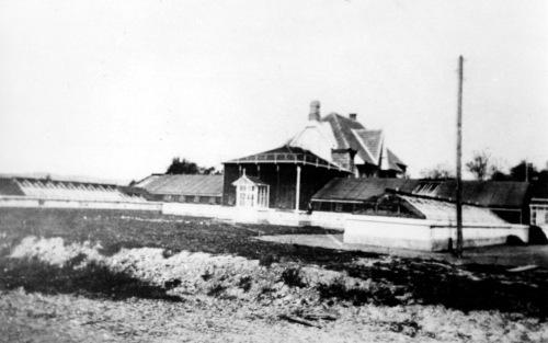 Marosvásárhely:városi pálmaház az Erzsébet liget mellett,1910 körül.