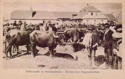 Nagyszeben:bivaly vásár.1914
