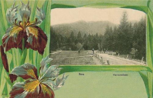 Brassó-Noa:mező.1901