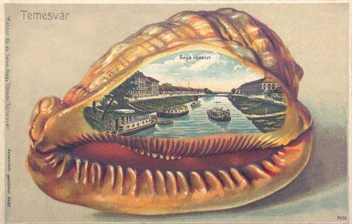 Temesvár:Bega részlet.(kagyló).1901