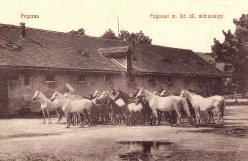 Fogaras:Magyar Királyi Állami ménestelep,1908.