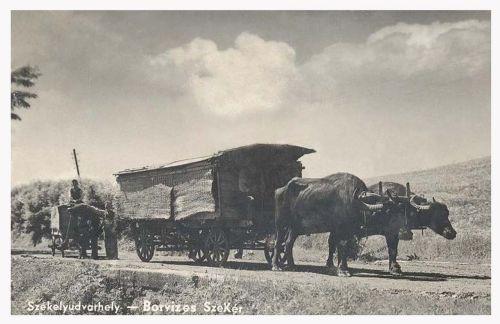 Székelyudvarhely:borvizes székely bivaj szekér.1942
