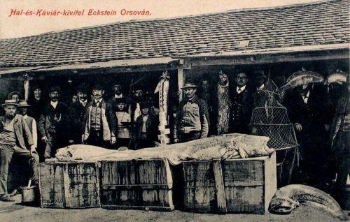 Orsova:hal és kaviár export kivitel,Eckstein-nél.1912