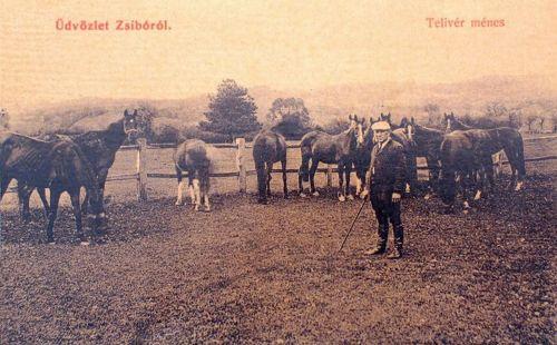 Zsibó:telivér ménes.1908
