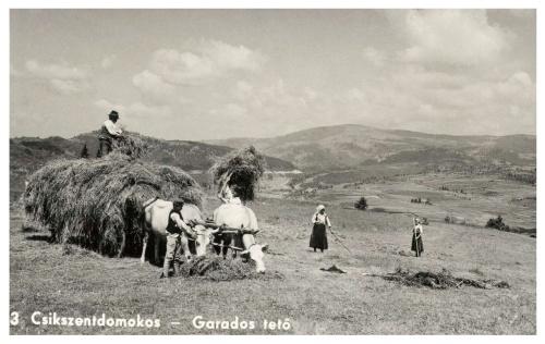 Csikszentdomokos:széna rakás a Garados tetőn,1941.