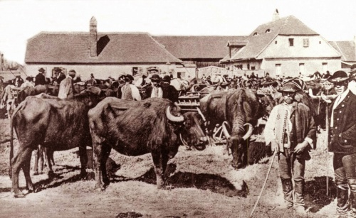 Nagyszeben:bivalyvásár,1917.