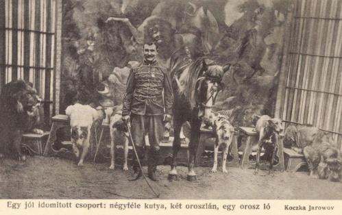 Nagyszebeni cirkusz:oroszlánok,kutyák és lovak,1907.